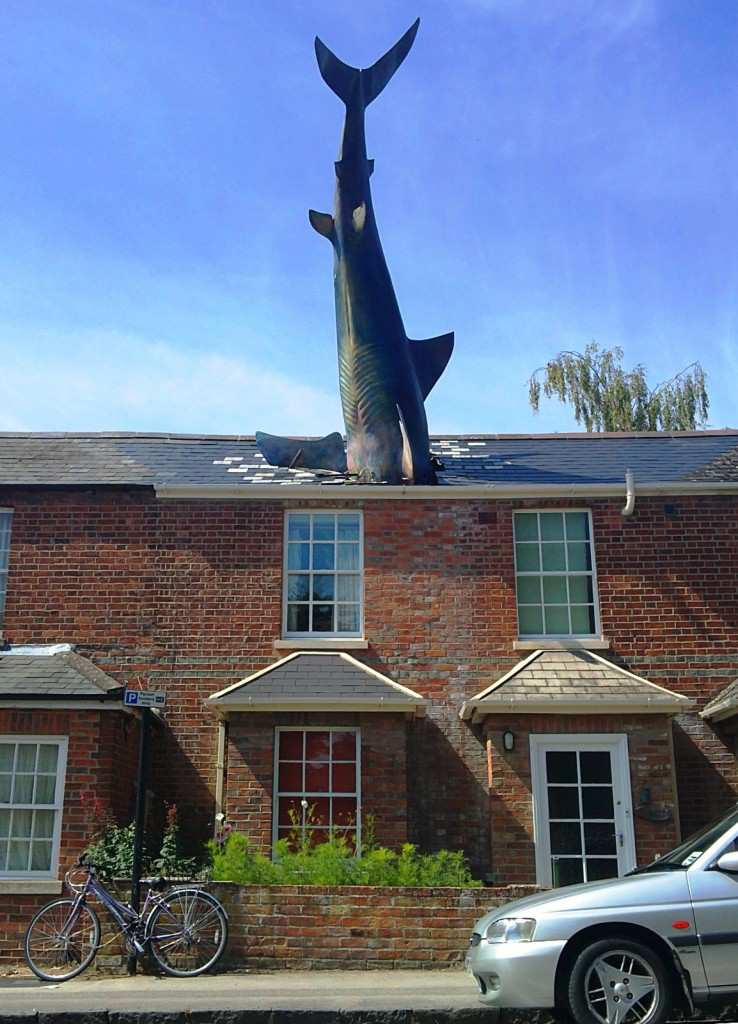 Hedington shark